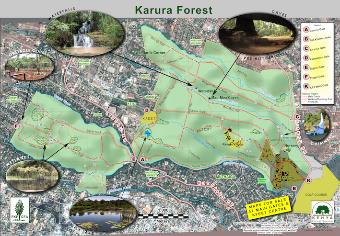 Karura Forest Hiking Trails