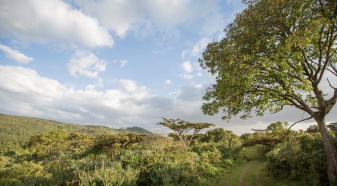 Mau Eburu – The Ndabibi – Forest Glade Trail