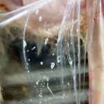 Air sac disease