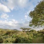 Mau Eburu - The Ndabibi - Forest Glade Trail