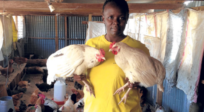 How and where to sell Kienyeji chicken