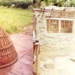Rearing Kienyeji (indigeneous) chicken